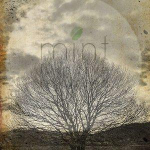 loan-sepia-tree