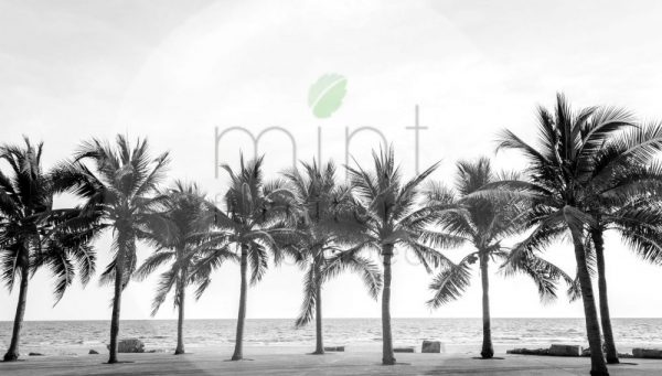 palm-tree-decoupage