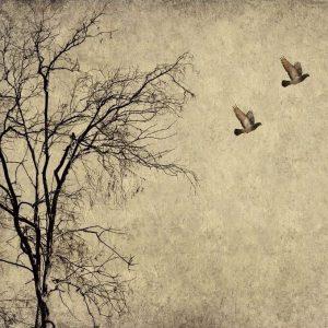 flying birds decoupage paper